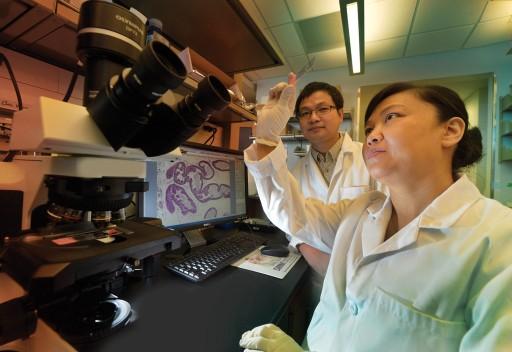 Drs. Chunhonh Yan and Hongmei Cui