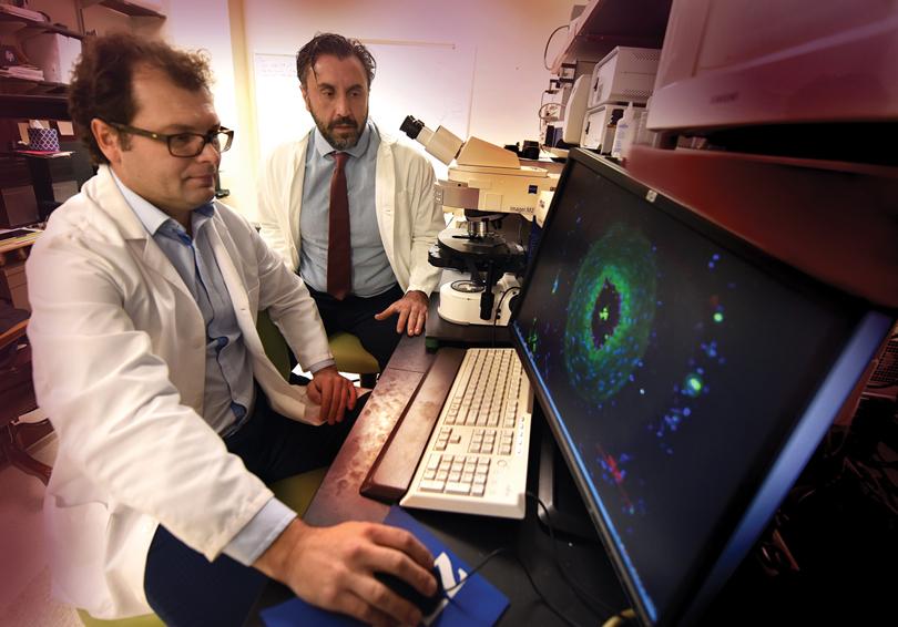 Drs. Dan Rudic and Zsolt Bagi