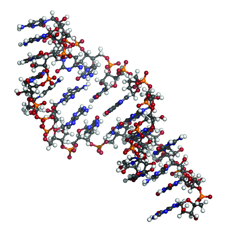 image of microRNA