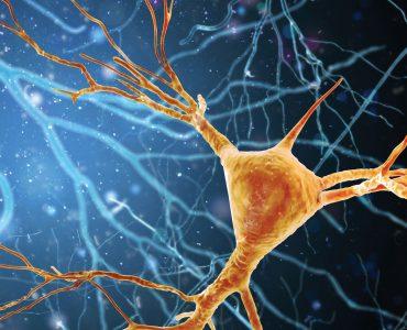 Illustration of brain neuron structure